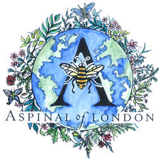 Bee Aspinal: Our Sustainability Journey